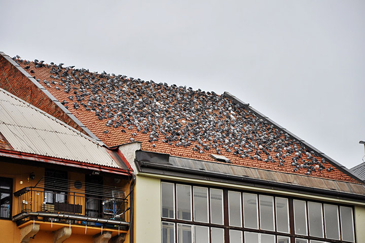A2B Pest Control are able to install spikes to deter birds from roofs in Ilford.
