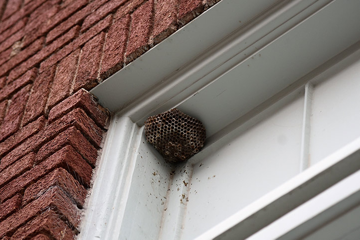 We provide a wasp nest removal service for domestic and commercial properties in Ilford.